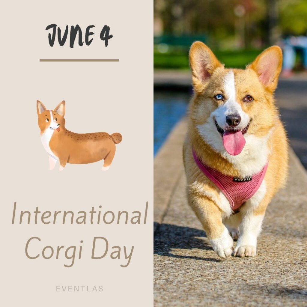 International Corgi Day