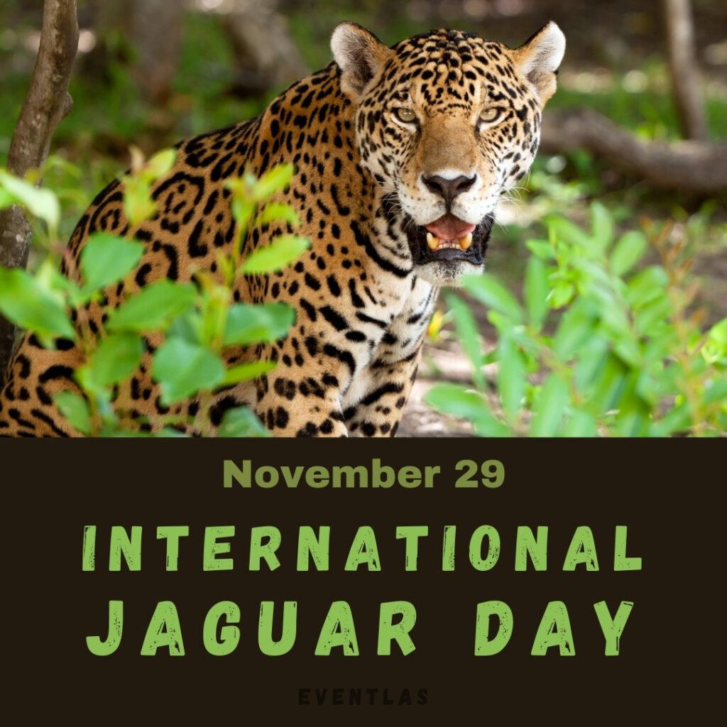 International Jaguar Day