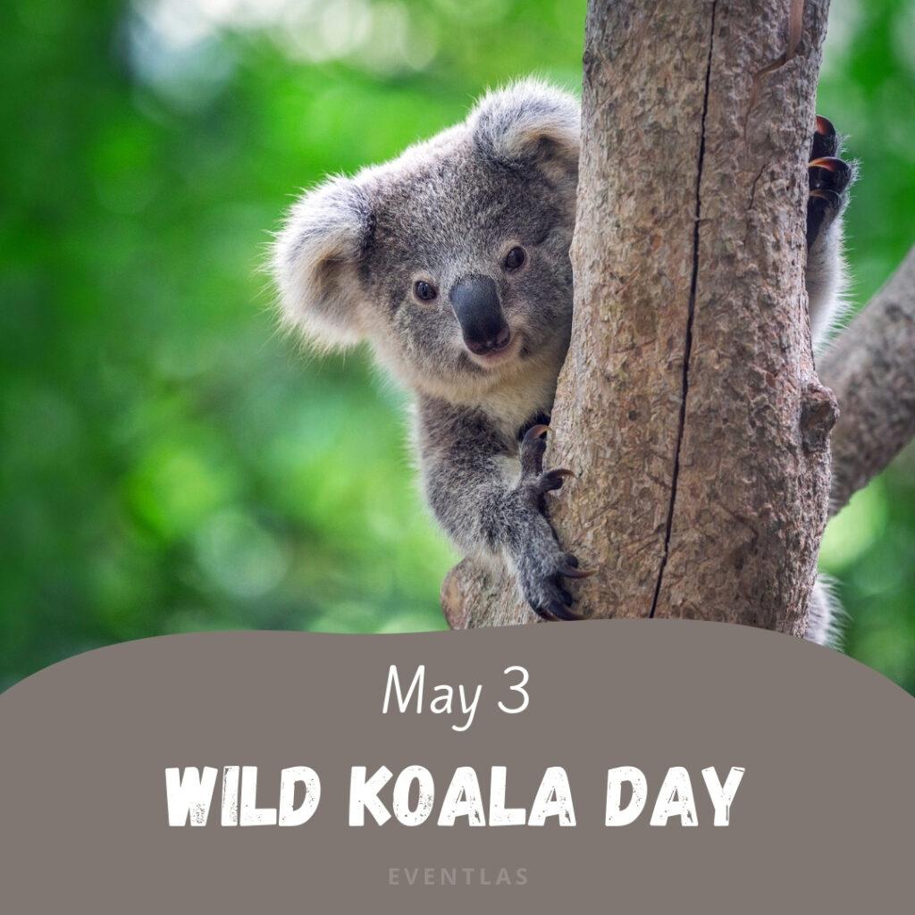 Wild Koala Day