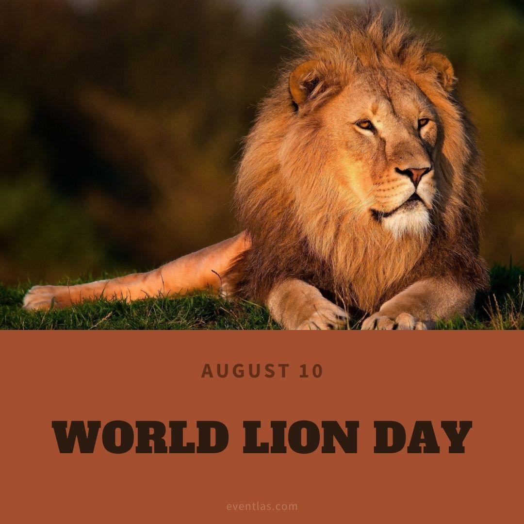 World Lion Day 2021   Eventlas